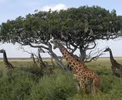 Vos vacances en Tanzanie - Actu