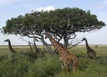 Vacances en Tanzanie - Safari